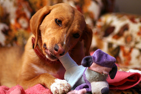 Are Your Pet's Toys Toxic-2
