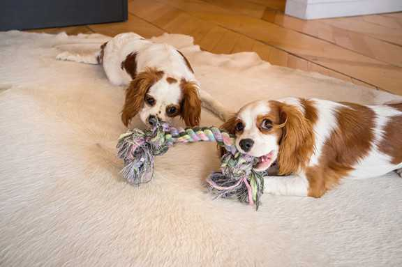 How to Choose Dog Toys-1