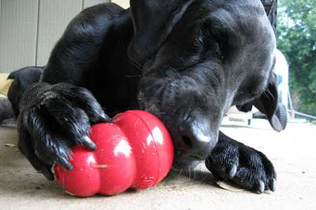 How to Use Kong Dog Toys-4