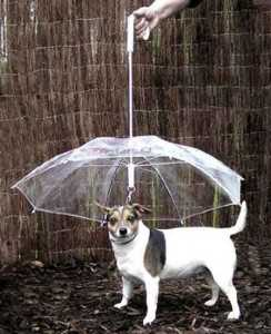 10 Ingenious Things For Your Dog -7