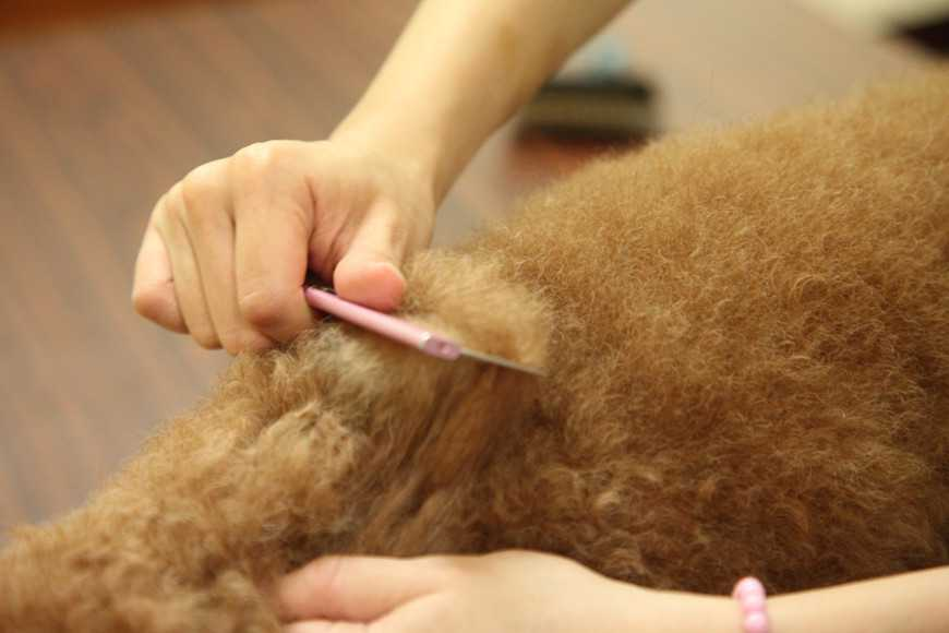 how to groom your dog-10