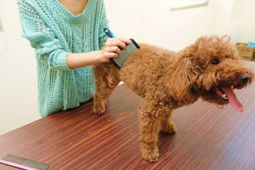how to groom your dog-3