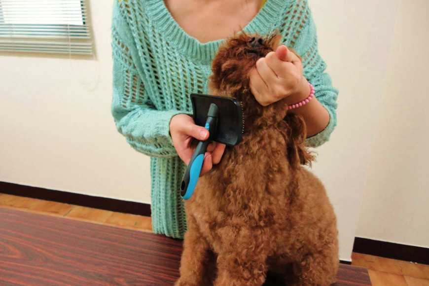how to groom your dog-8