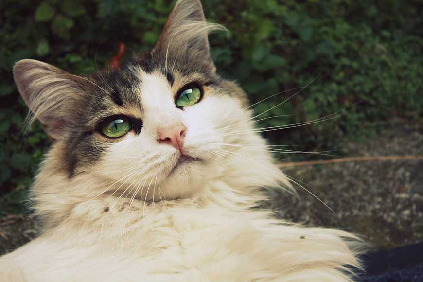 Seven Most Common Illnesses in Senior Cats-2
