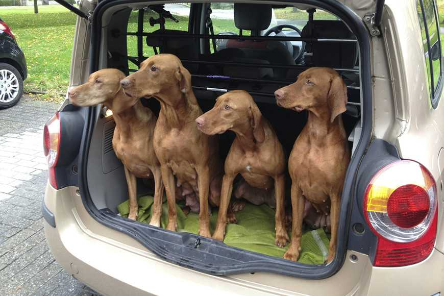car travel with your pets-3