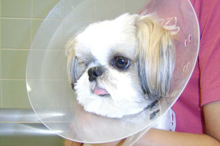 Caring for Your Pet After Surgery-3