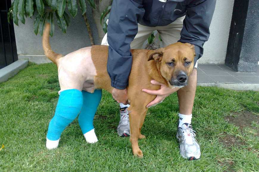 Caring for Your Pet After Surgery-4
